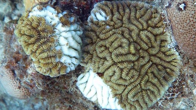 062819 CM coral disease feat