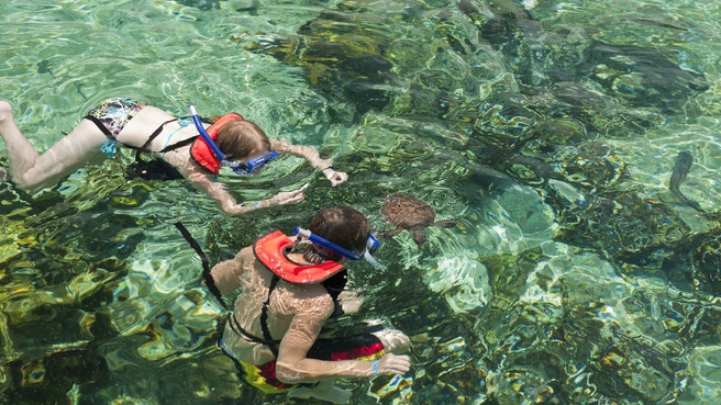 2 children in life vests snorkelling with a turtle at the farm