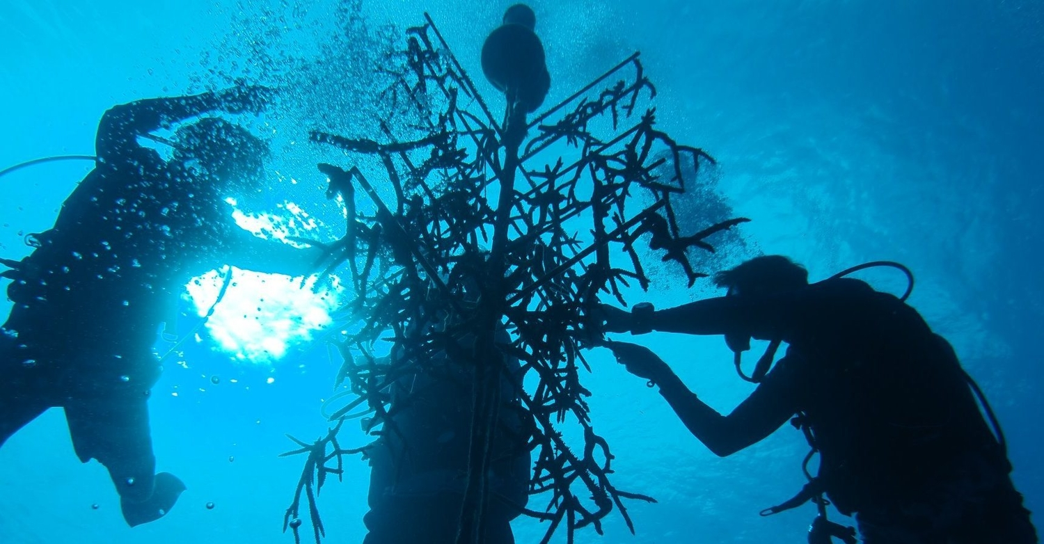 3 divers silhouetted working on a coral nursery