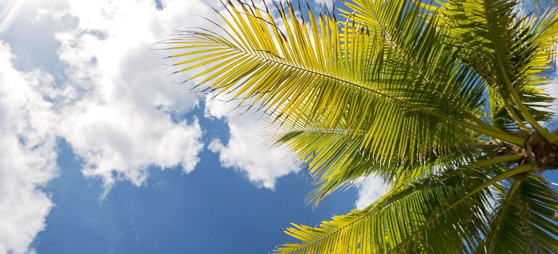 Palm Tree Blue Sky