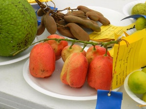 Prize winning fruits and veg at the agricultural show