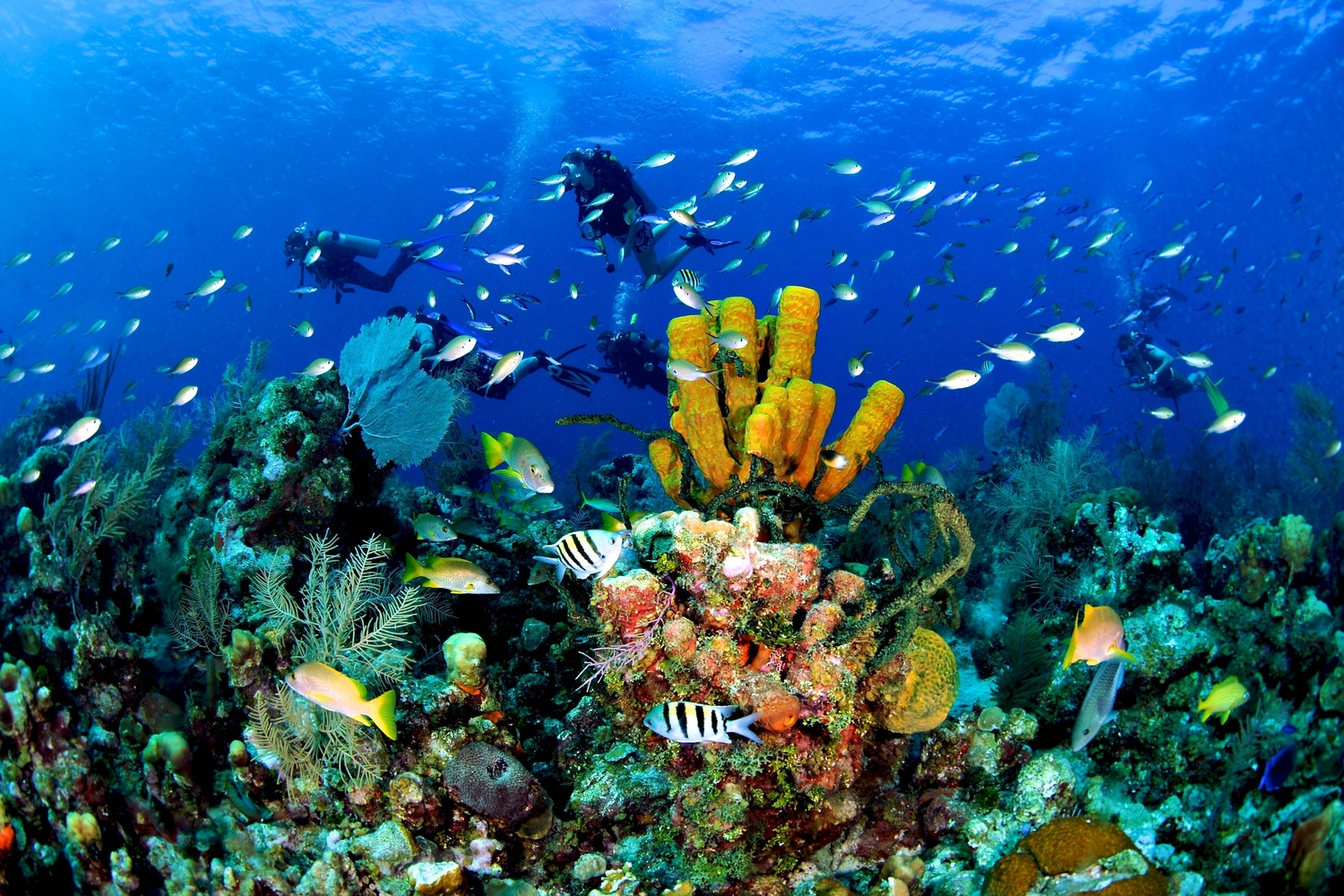 Scuba divers exploring the colourful Cayman Reef