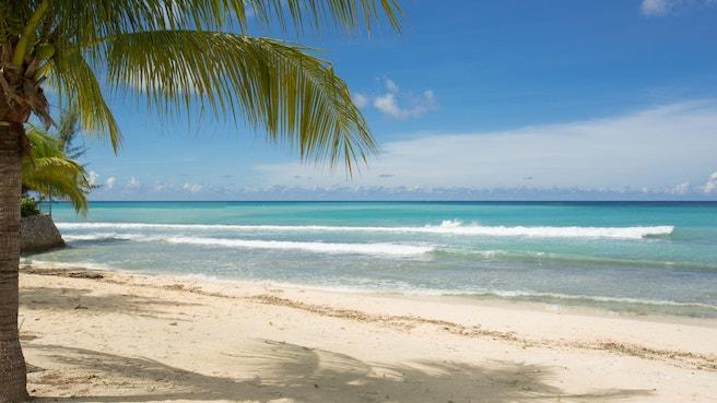 South sound Public beach framed by a palm tree