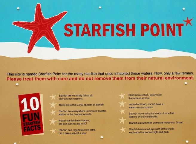 Starfish Point Starfish facts