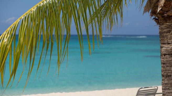 Through palm tree overlooking blue ocean beach