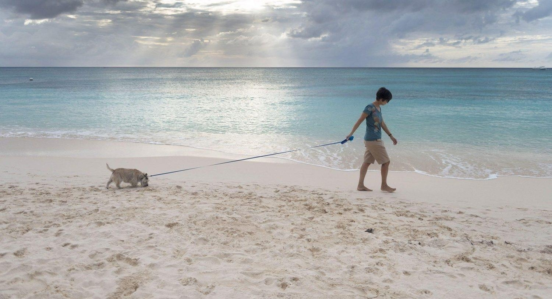 Girl walking foster dog on beach