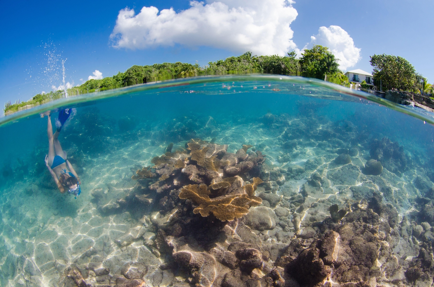 Over under of woman with blue fins and blue bikini freediving