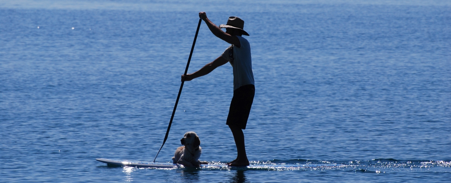 Pet friendly staycations hero image man paddleboarding with dog