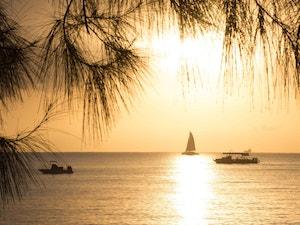 Sunset sail silhouette seen through casaurina trees