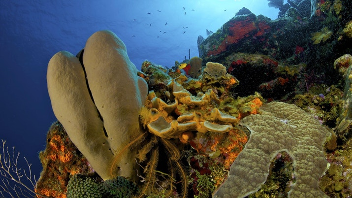 Underwater coral with fish off in the distance and light coming from above