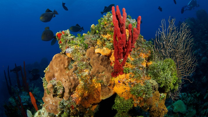 Underwater image of red coral and fish