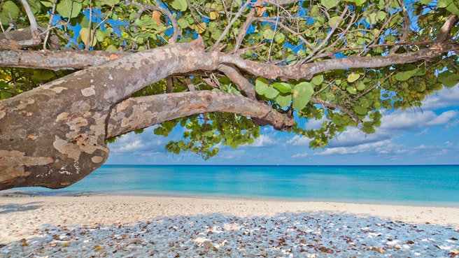 View through sea grape tree of beach and ocean
